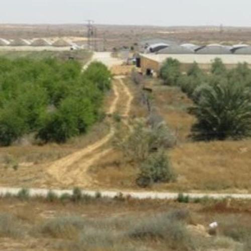 Rejuvenation: 21st Century Spirit in the Sand: From Gaza to Halutza