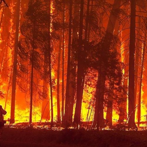 SNEAKLISTEN:  Bosbrand/Wildfire - Kain_niaK