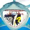 Hai Fish Pool Live