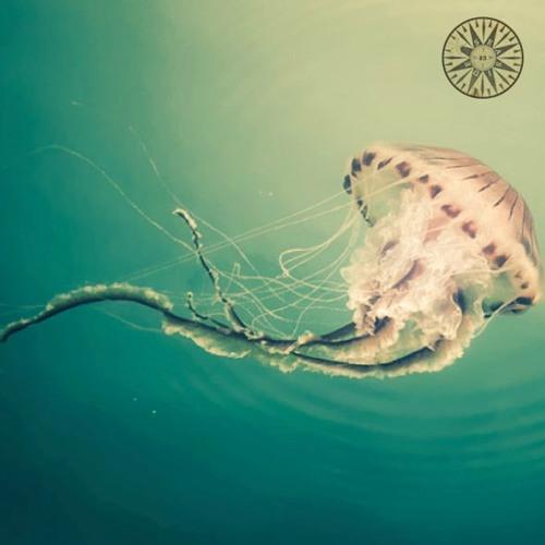 Seasidetrip 83   dancing jellyfish   Landhouse & Raddantze