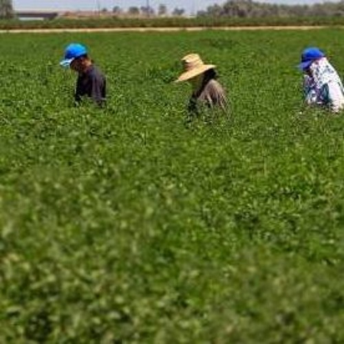 Chef Power Hour: What Chefs Need to Know About Farmworkers' Rights
