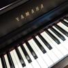 Chopin Nocturne No 20 Saugferkel