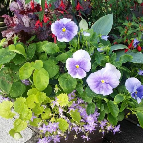 June 5 Gardening 101 Hr 1