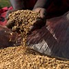 Uganda: Fake seeds to dwindle the agriculture sector, by B4FA Fellow Sara Mawerere