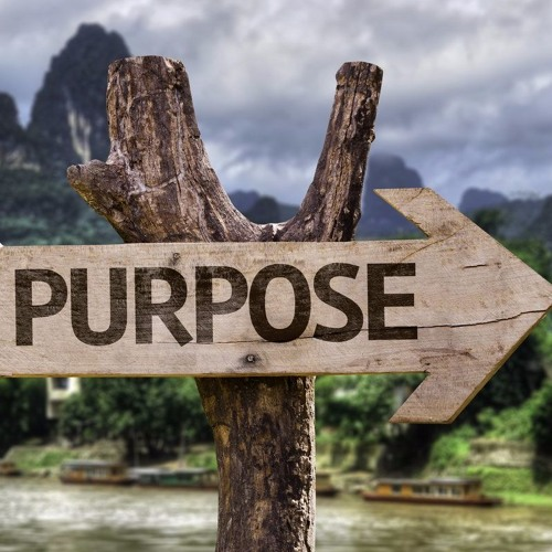 LIFE: What is your purpose? Do we even need one?