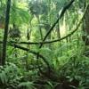Ambient Background Rainforest