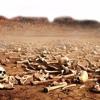 Mensagem - Vale de ossos Secos,talvez a sua vida esteja assim!!!