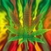 Download Reggae/Hip-hop Beat FreeStyle (Prod. Anno Domini) Mp3