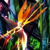 "B. A. L. A. N. C. E. | A Tribe Called Quest ""Lyrics to Go"" Instrumental"
