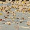 NAMIE AMURO [安室奈美恵] - Love Story (DSK&MBTF I'd Really Love To See You Again Someday Remix Pt.2) [HQ]