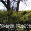 Water Plants (Prod Enhydra)