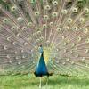 Bhakti Birds Soundtrack