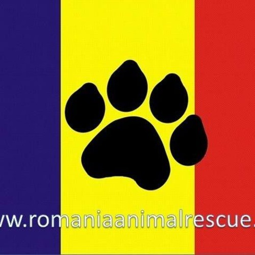 Interview With Nancy Janes & Aurelian Stefan From Romania Animal Rescue (April 2016)