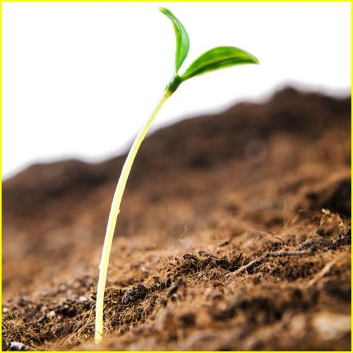 Hope Is Like A Seed