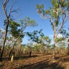 Understanding Leases - Part 3 of 4 - Leases started in remote communities during the intervention