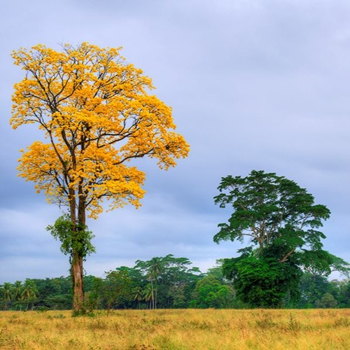 A Partir De Hoy | Bosques Mágicos | 24Nov2015