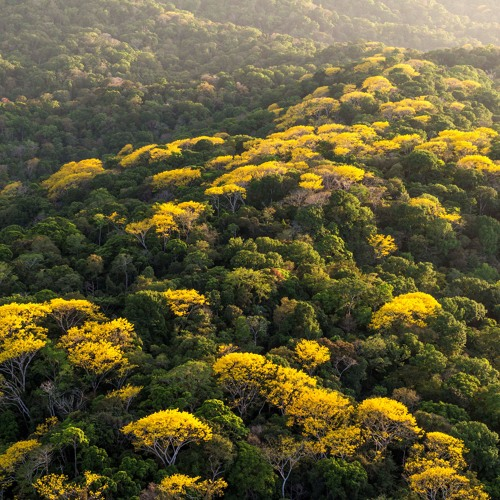 Nacional | Bosques Mágicos | 12Diciembre2015