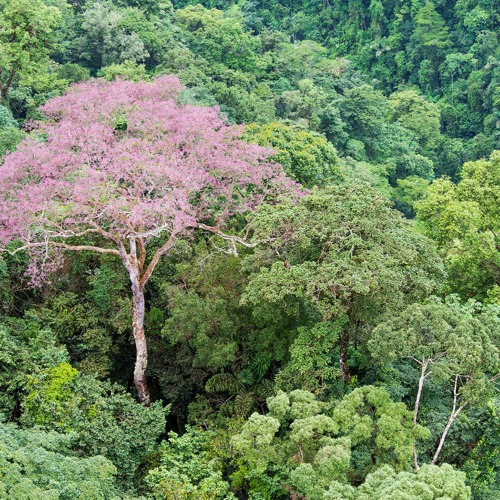 NueveCincoNueve | Bosques Mágicos