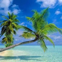 Phora - Palm Trees