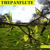 The Pan Flute [Free Download]
