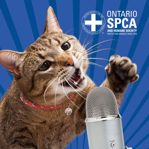 Beat the Heat Kenora: Changing lives up North-Ontario SPCA Animals' Voice Pawdcast-Season5,Episode12