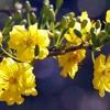 Gửi em phấn trắng mai vàng