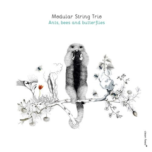 "Modular String Trio - ""MST 02.00.15"" ANTS, BEES AND BUTTERFLIES [Clean Feed, 2016]"