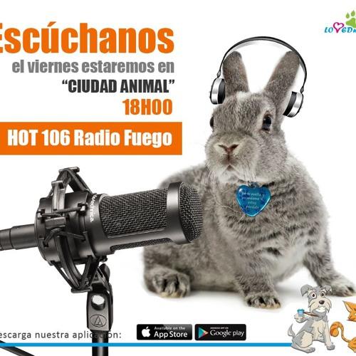 Entrevista Ciudad Animal