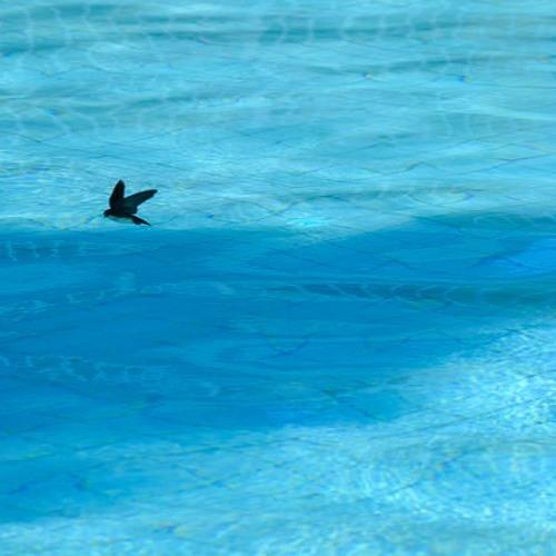 MAH Art Works - Pool