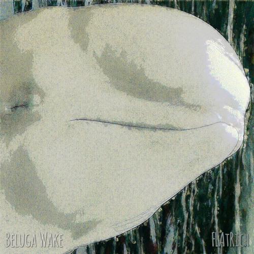 Beluga Wake