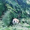 Desiigner - Panda (Bassti Lofi Remix)