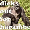 Dicks out for harambe. (freestyle)