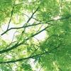 Summer Morning / Hirokazu Sato.mp3