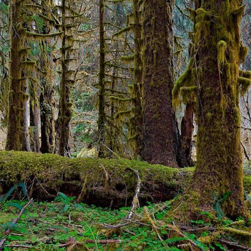 Kri Samadhi & Baba Bubo - Forest Floor