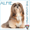 Alfie The Lhasa Apso Ditty