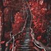 Eddie Vedder - Long Nights (Luminari Cover)