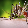 SciCafe Special Event: Zika - What You Need To Know