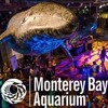 THE PARTY @ The Monterey Bay Aquarium : Oct 1, 2016