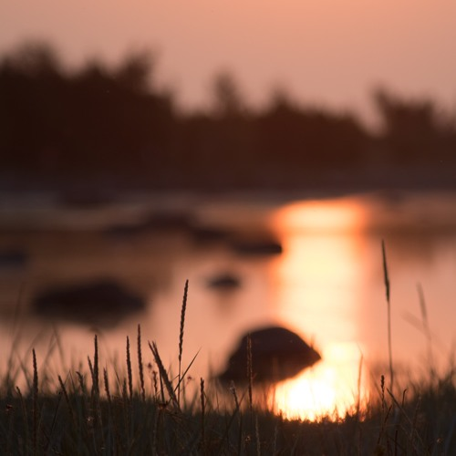 Summer evening on Baltic Sea coastal meadow