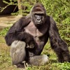 Dicks Out (For Harambe)