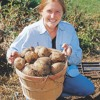 Wollmer - Planting Potatoes In The Land Of Rocks