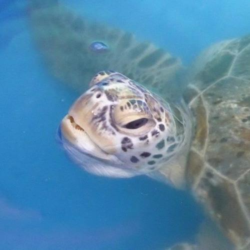 09 PP Mandubarra Aboriginal Land & Sea - Turtle Rehabilitation
