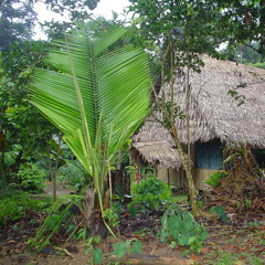 Forests Of The World: Jaromir Ralph Koper - Amazon Rainforest - South America