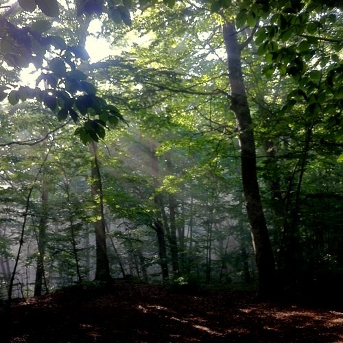 Forests Of The World: Francesco Murano - Beech Forest Song - Italy