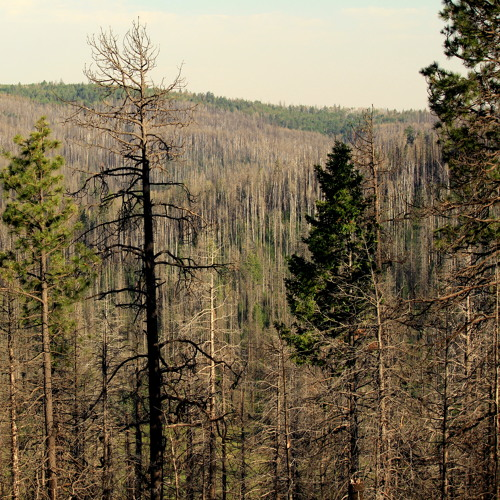 Forests Of The World: Christine Hass - Mogollon Rim - Arizona - USA