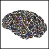 Boltzman Brain