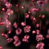 Bunga Bakawali (cover)