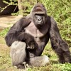 A TRUE FRIEND -- RIP HARAMBE (TRIBUTE SONG) By FilthyFrank