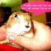 LETS PLAY (in Prairie Dog)