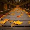 Ed Sheeran-autumn leaves cover-aichen